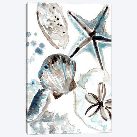 Cerulean Seashells I Canvas Print #JEV2704} by June Erica Vess Canvas Print