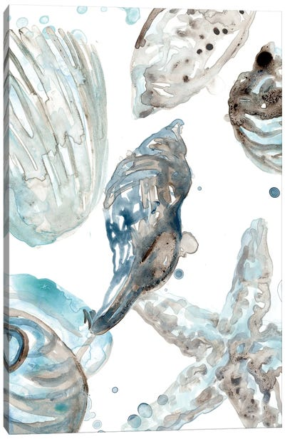 Cerulean Seashells III Canvas Art Print