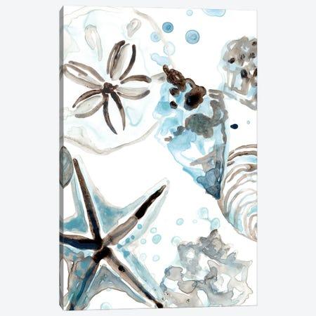 Cerulean Seashells IV Canvas Print #JEV2707} by June Erica Vess Art Print