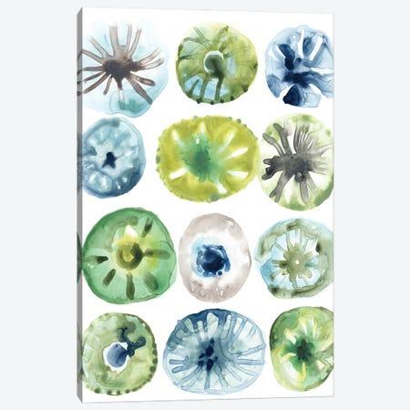Sea Urchin Assortment I Canvas Print #JEV3007} by June Erica Vess Canvas Art Print