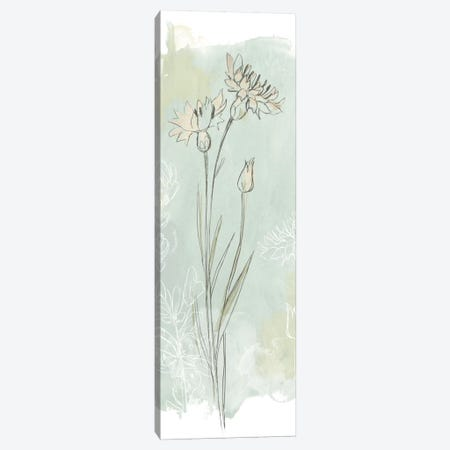 Stone Flower Study I Canvas Print #JEV337} by June Erica Vess Canvas Art Print