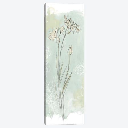 Stone Flower Study I Canvas Print #JEV337} by June Erica Vess Canvas Art Print