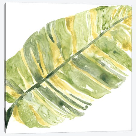 Verdant Impressions V Canvas Print #JEV354} by June Erica Vess Art Print