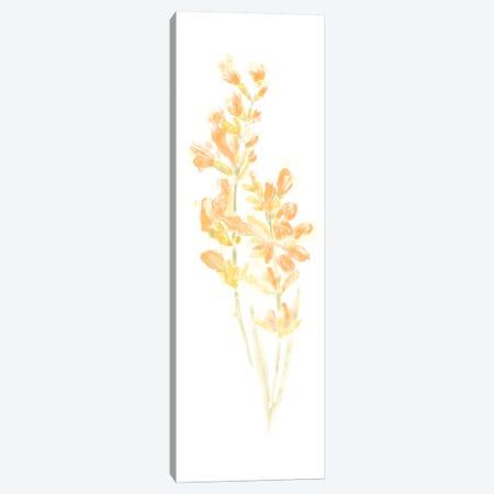 Bouquet Blush I Canvas Print #JEV359} by June Erica Vess Canvas Artwork