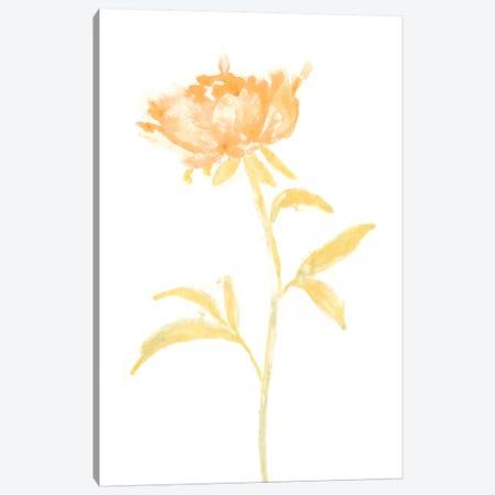 Bouquet Blush II Canvas Print #JEV360} by June Erica Vess Canvas Art Print