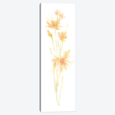 Bouquet Blush III Canvas Print #JEV361} by June Erica Vess Canvas Print