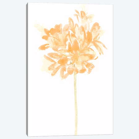 Bouquet Blush VI Canvas Print #JEV364} by June Erica Vess Canvas Artwork