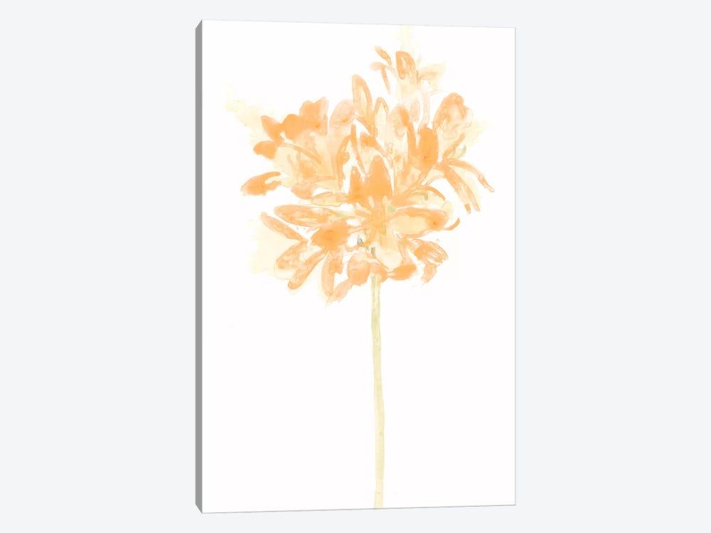 Bouquet Blush VI by June Erica Vess 1-piece Canvas Wall Art