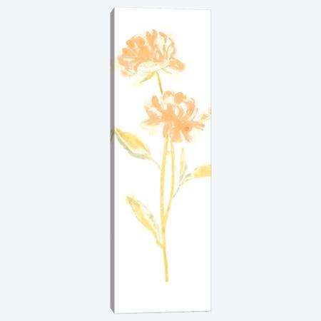 Bouquet Blush VII Canvas Print #JEV365} by June Erica Vess Canvas Art