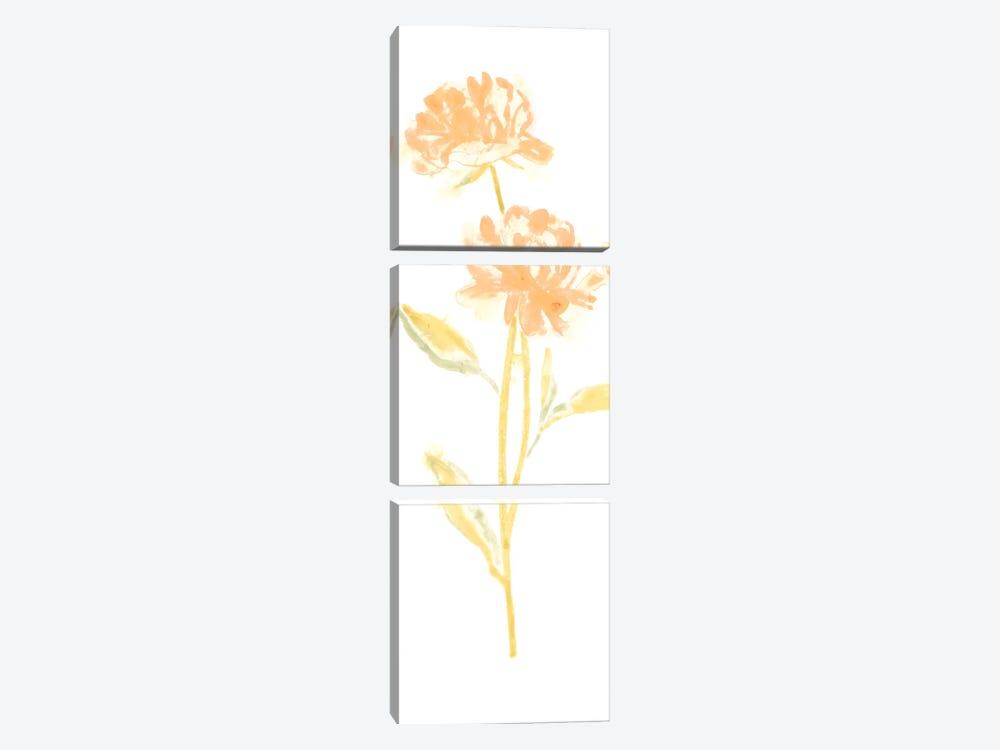 Bouquet Blush VII by June Erica Vess 3-piece Canvas Art Print