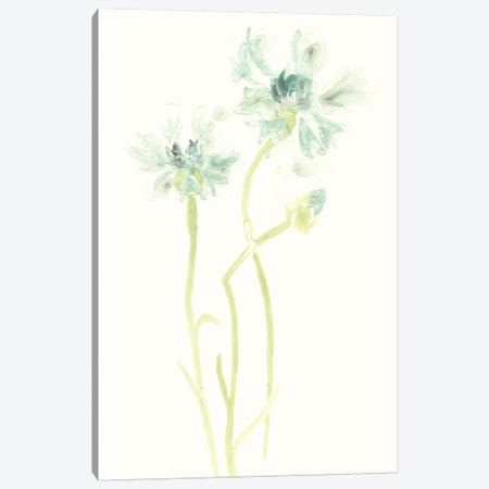 Cornflower Study II Canvas Print #JEV392} by June Erica Vess Canvas Artwork