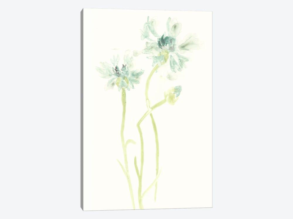 Cornflower Study II by June Erica Vess 1-piece Art Print