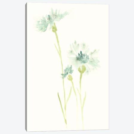 Cornflower Study III Canvas Print #JEV393} by June Erica Vess Canvas Wall Art