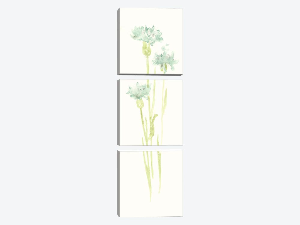 Cornflower Study IV by June Erica Vess 3-piece Canvas Print