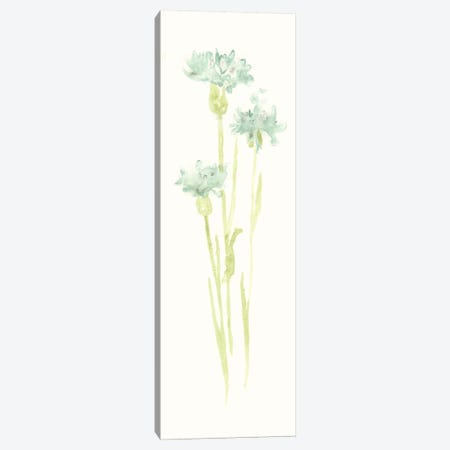 Cornflower Study IV Canvas Print #JEV394} by June Erica Vess Canvas Print