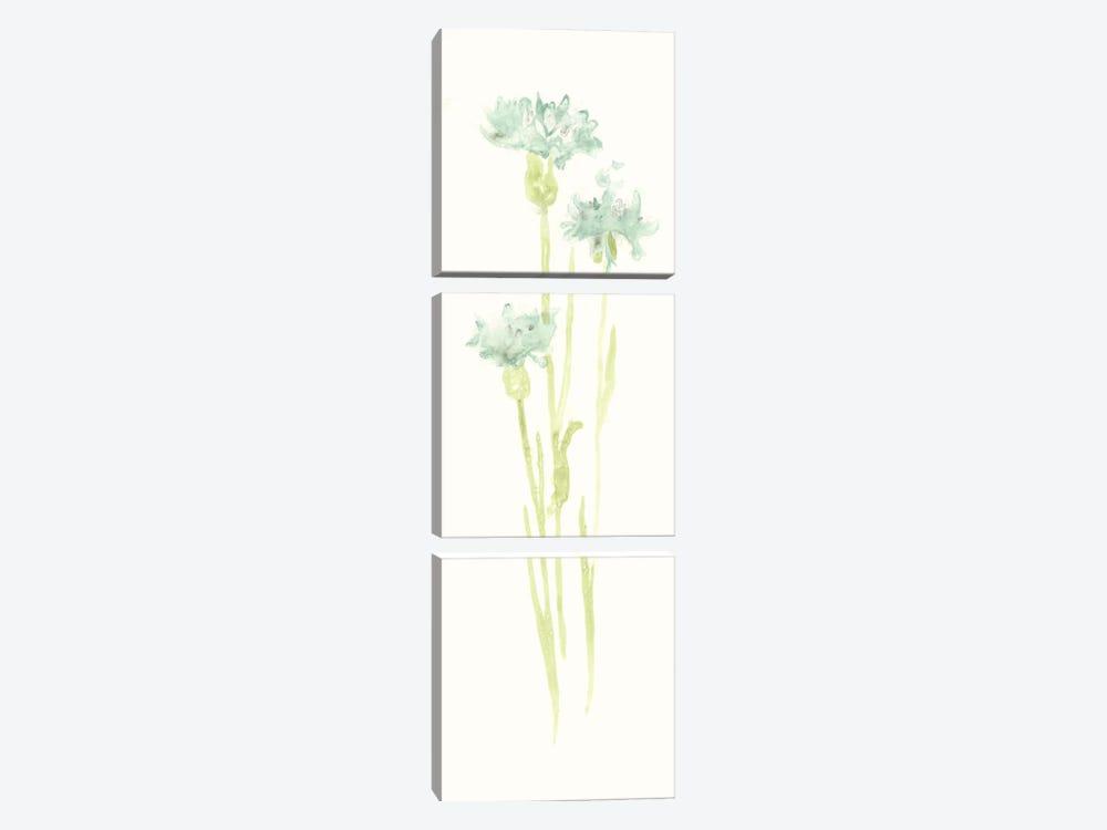 Cornflower Study IV by June Erica Vess 3-piece Canvas Print