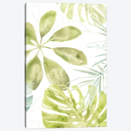 Island Medley II Canvas Print #JEV566} by June Erica Vess Canvas Art