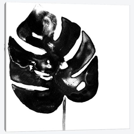 Monochrome Tropic I Canvas Print #JEV590} by June Erica Vess Canvas Art