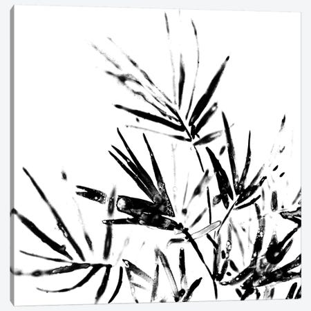 Monochrome Tropic II Canvas Print #JEV591} by June Erica Vess Canvas Art