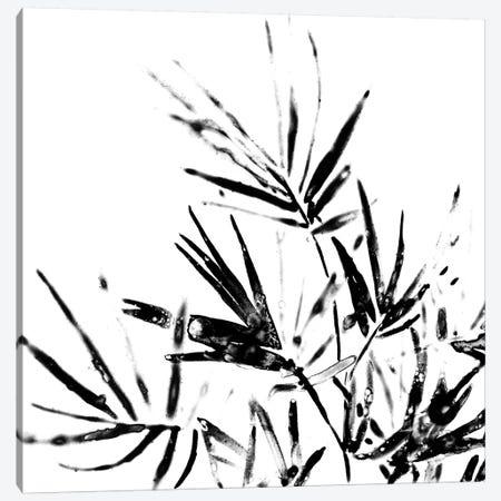 Monochrome Tropic II Canvas Print #JEV591} by June Erica Vess Canvas Art