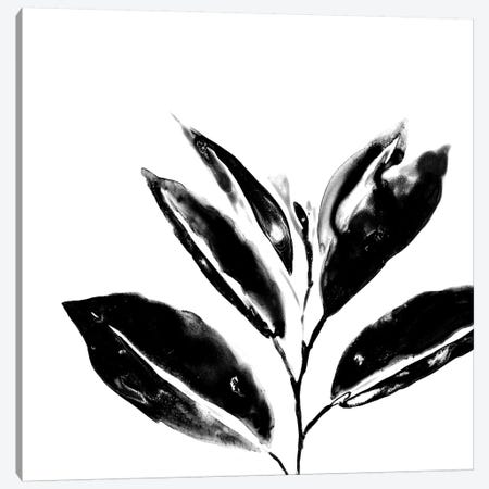 Monochrome Tropic IV Canvas Print #JEV593} by June Erica Vess Canvas Art
