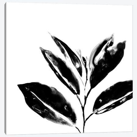 Monochrome Tropic IV Canvas Print #JEV593} by June Erica Vess Canvas Art