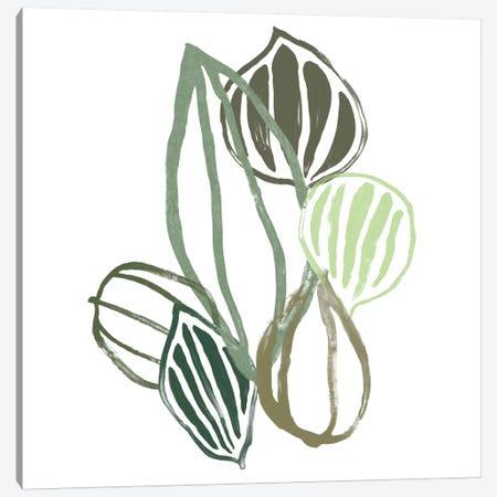 Botanical Interim II Canvas Print #JEV710} by June Erica Vess Canvas Wall Art
