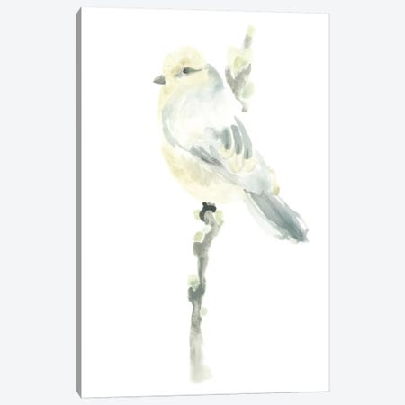 Avian Impressions I Canvas Print #JEV75} by June Erica Vess Canvas Wall Art