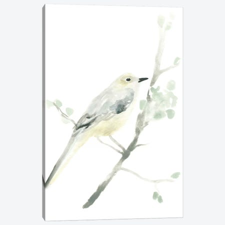 Avian Impressions II Canvas Print #JEV76} by June Erica Vess Canvas Art