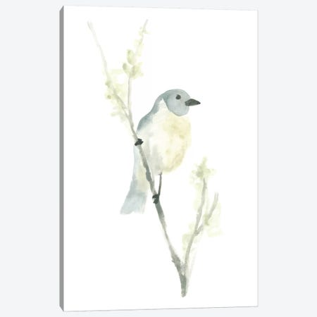 Avian Impressions III Canvas Print #JEV77} by June Erica Vess Canvas Artwork