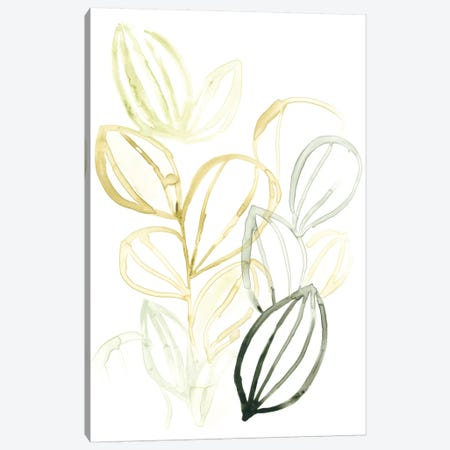 Seed Spectrum I Canvas Print #JEV829} by June Erica Vess Canvas Artwork