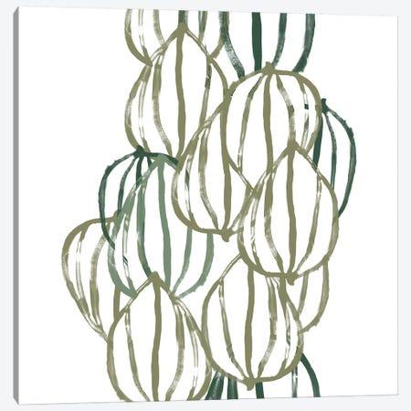 Seed Vessels III Canvas Print #JEV833} by June Erica Vess Art Print