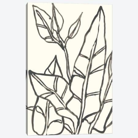 Tropical Contour III Canvas Print #JEV855} by June Erica Vess Canvas Art