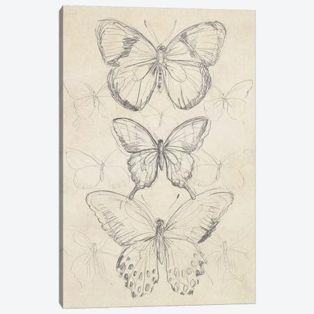 Vintage Butterfly Sketch I Canvas Print #JEV863} by June Erica Vess Canvas Art