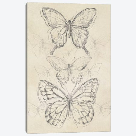 Vintage Butterfly Sketch II Canvas Print #JEV864} by June Erica Vess Art Print
