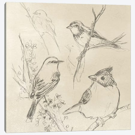 Vintage Songbird Sketch I Canvas Print #JEV865} by June Erica Vess Canvas Print