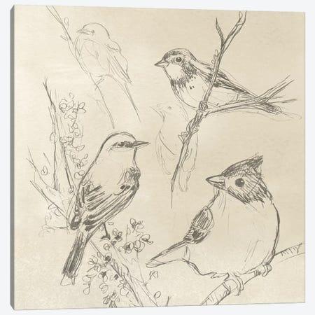 Vintage Songbird Sketch I Canvas Print #JEV865} by June Erica Vess Canvas Print