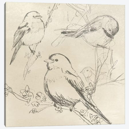 Vintage Songbird Sketch II Canvas Print #JEV866} by June Erica Vess Canvas Art Print