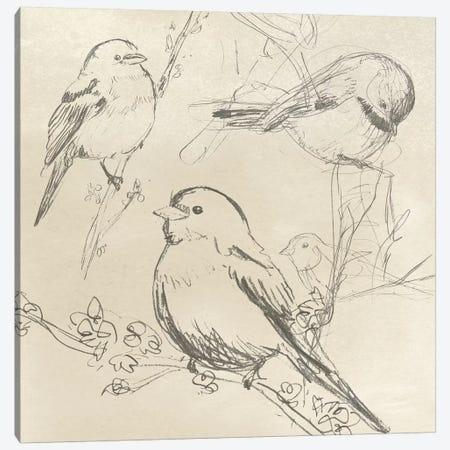 Vintage Songbird Sketch II Canvas Print #JEV866} by June Erica Vess Canvas Art Print