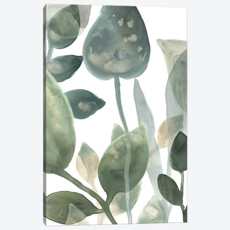 Water Leaves I Canvas Print #JEV871} by June Erica Vess Canvas Art Print