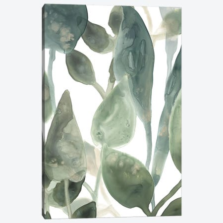 Water Leaves IV Canvas Print #JEV874} by June Erica Vess Canvas Artwork