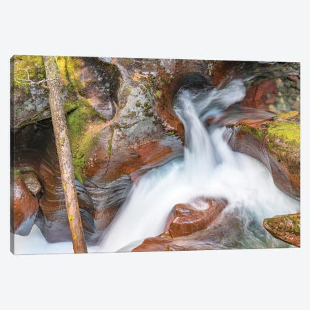 Avalanche Creek, Glacier National Park, Montana Canvas Print #JFF11} by Jeff Foott Art Print