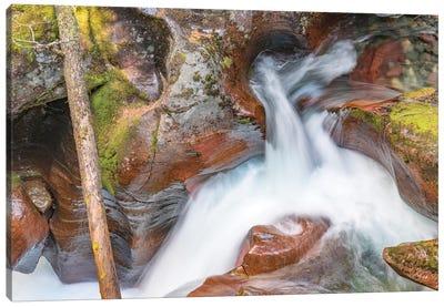Avalanche Creek, Glacier National Park, Montana Canvas Art Print