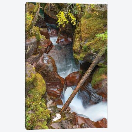 Avalanche Creek, Glacier National Park, Montana Canvas Print #JFF12} by Jeff Foott Canvas Art Print