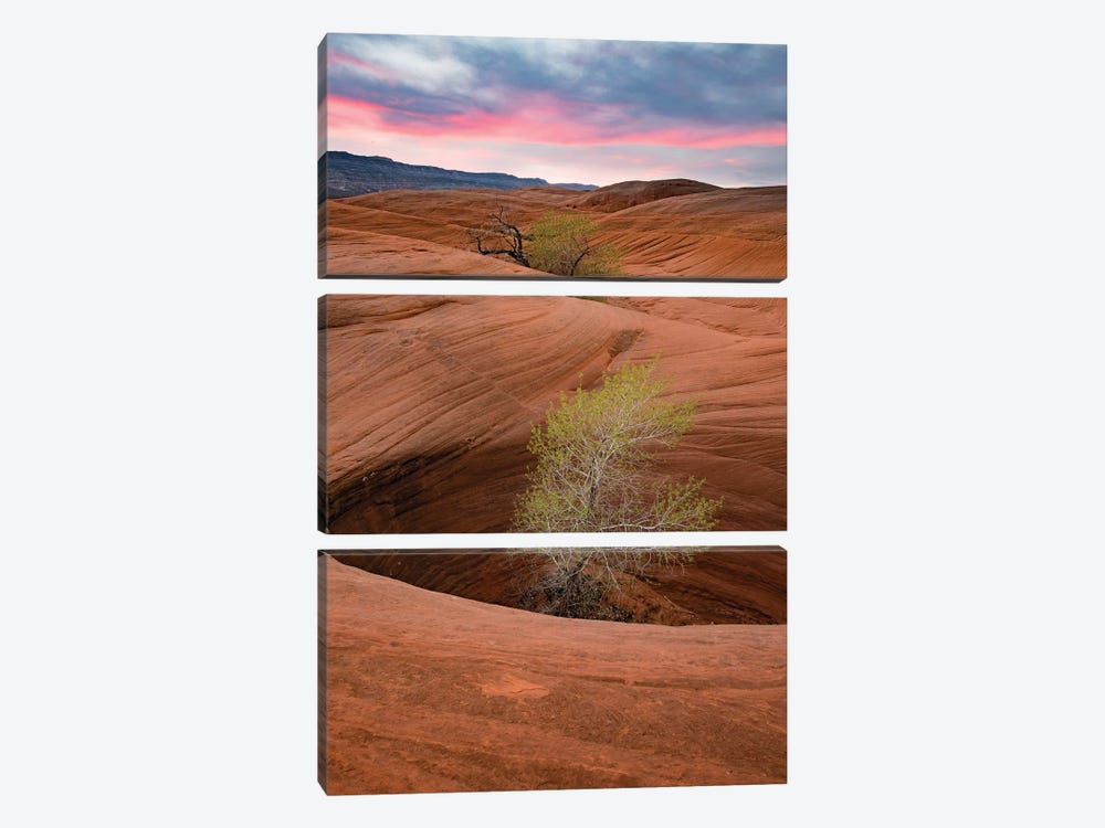 Cottonwood Tree In Hole, Grand Staircase-Escalante National Monument, Utah I by Jeff Foott 3-piece Canvas Print