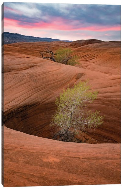 Cottonwood Tree In Hole, Grand Staircase-Escalante National Monument, Utah I Canvas Art Print