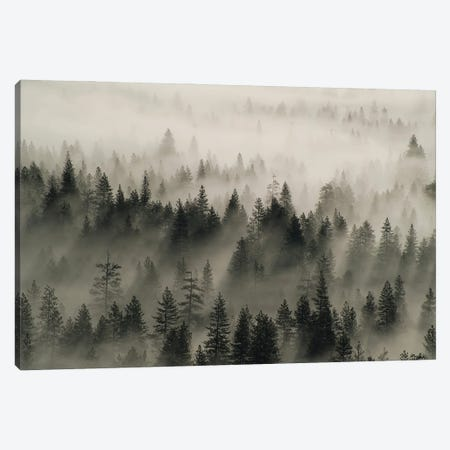 Coniferous trees in mist, Yosemite National Park, California Canvas Print #JFF27} by Jeff Foott Canvas Print