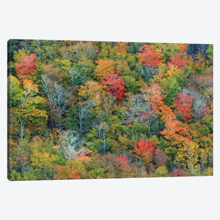 Deciduous forest in autumn, Acadia National Park, Maine Canvas Print #JFF28} by Jeff Foott Canvas Artwork