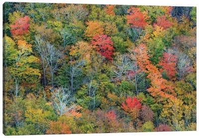 Deciduous forest in autumn, Acadia National Park, Maine Canvas Art Print