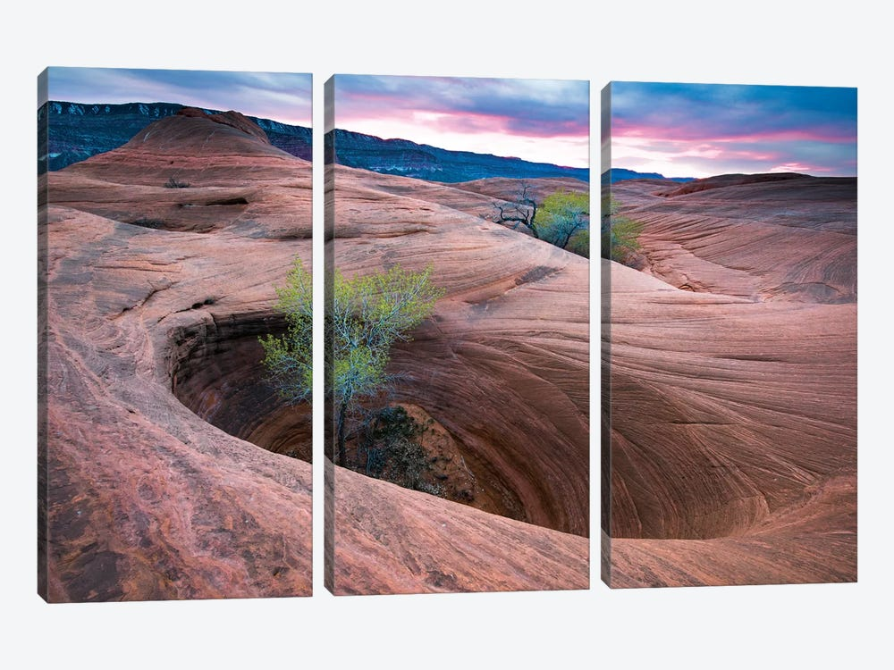 Cottonwood Tree In Hole, Grand Staircase-Escalante National Monument, Utah II by Jeff Foott 3-piece Canvas Art